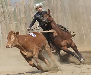 Rodeo A Cavallo.Cavallo Pioppo67 Flickr