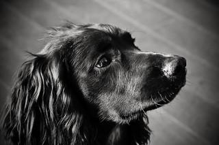 Image Result For Always Faithful Dog