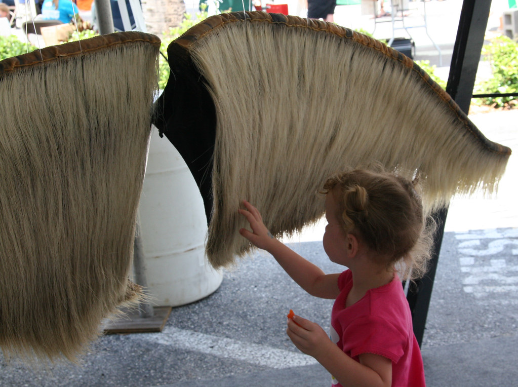 bryde s whale baleen a young visitor approaches a display flickr