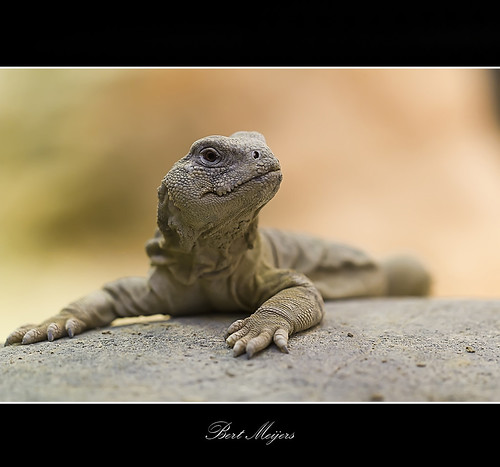 Lizard | by thanks for 900k views