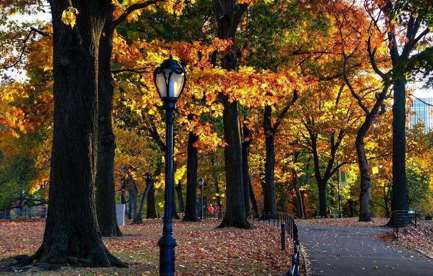 Αποτέλεσμα εικόνας για autumn manhattan