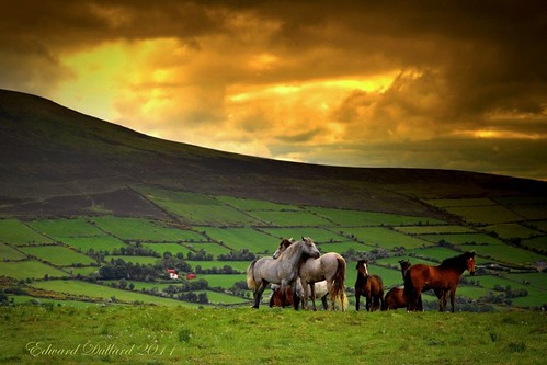 WILD AND FREE. | by Edward Dullard Photography. Kilkenny, Ireland.