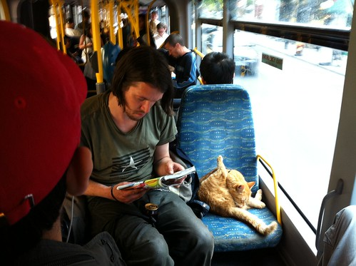 Cat on bus | by acb