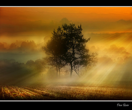 Morning view with ground fog (Explore) | by Peter Roder