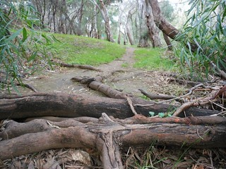 Roots Blocking Path | by mikecogh