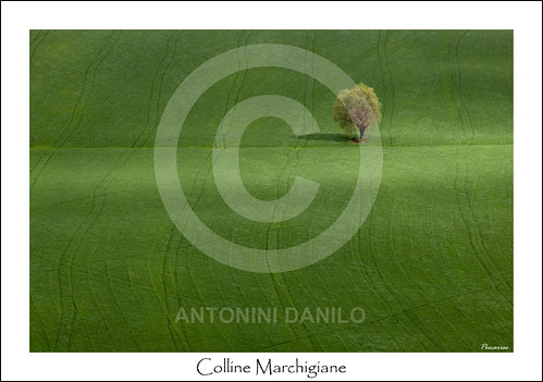 Colline Marchigiane (14244) | by Danilo Antonini (Pescarese)