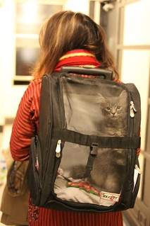 Portable kitty... | by Golbarg Bashi Fine Arts Photography
