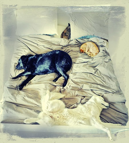 Sleeping in with the family ... | by Ernie Fischhofer