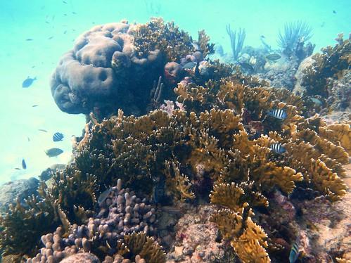 Snorkeling St Croix Virgin Islands