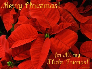 Merry Christmas for All my Flickr Friends! | by Blanca Rosa2008 +3,900,000 Views Thanks to All