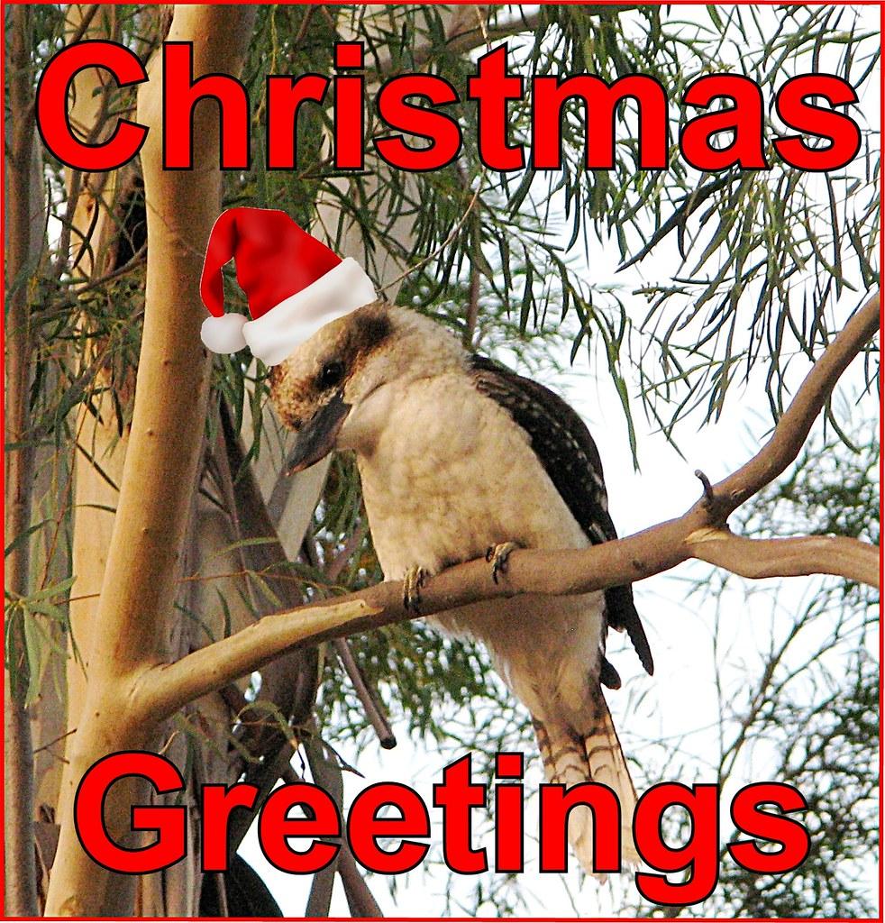 Ecard Christmas Greetings Kookaburra Cathy Flickr