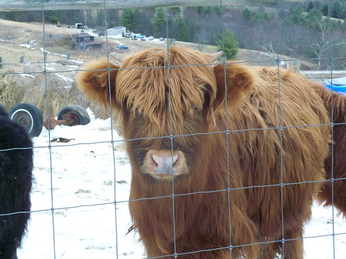 Highland Hello | by Understated Flea