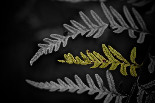 Fern | by morribrad