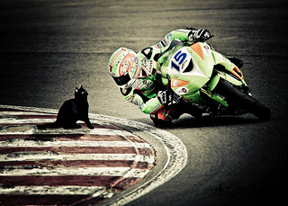 Black cat vs ben Wilson | by darrenstarr