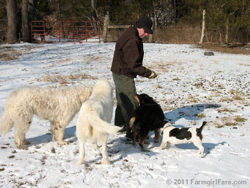 Joe and all the dogs in Donkeyland | by Farmgirl Susan