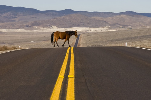 Horse Xing ( free range horse wandering through the Nevada desert) | by dirk huijssoon