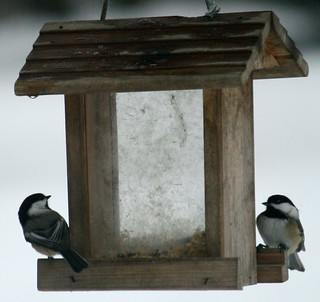 Two Chickadees at the feeder | by ctberney