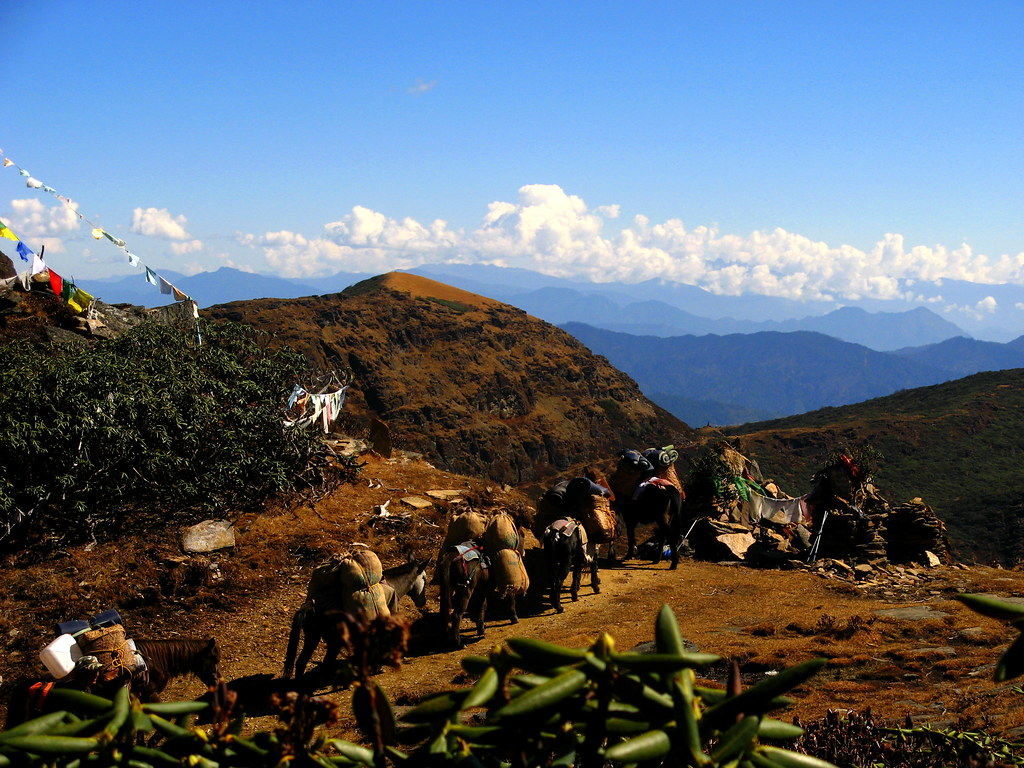 Horses On The Druk Path Bhutan Horses Carrying Supplies Flickr