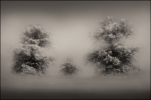 Family trees | by adrians_art