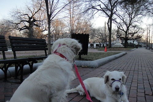 Checking out the Squirrels of Lafayette Park | by epc