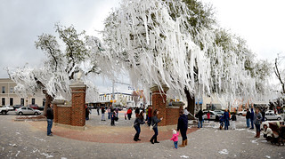 Toomer's Corner | by Tim.Walker