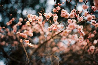 blooming now | by ditao