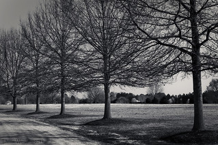 Tree Line II | by Denise Worden