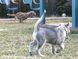 Dog Trotter For Sale Uk