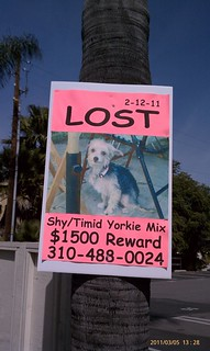 Lost pet rewards: def more lucrative in Studio City than Oakland. | by agahran