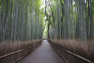 Sagano bamboo forest | by paprikaOptic