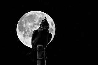 The Crow & The Moon [Explored] | by Dave Morrow Photography