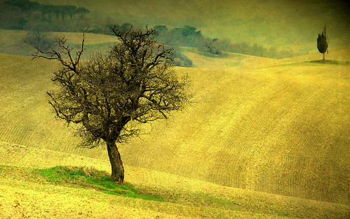 trEEs in thE fiElds | by www.davidbutali.net