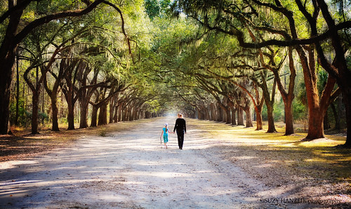 savannah - wormsloe | by Suzy Hanzlik