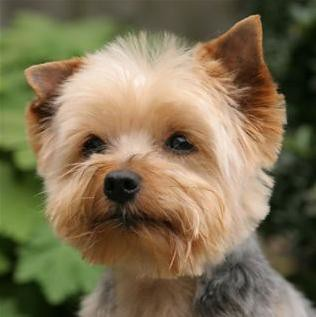how much is a dog haircut yorkie todl jackie grimmett s groom 5138 | 5574854146 3c85983f9f