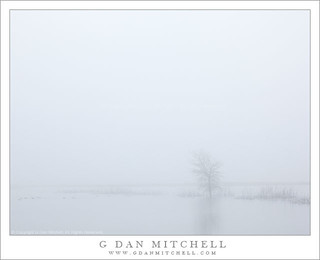 Tree and Pond, Fog | by G Dan Mitchell