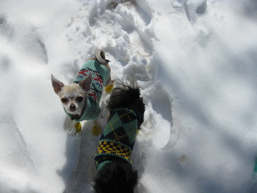 Itzl and Xoco - great snow explorers | by nodigio