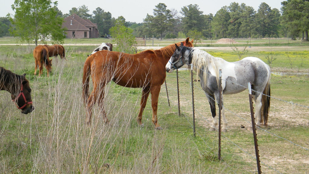 Image result for neighbors with horses