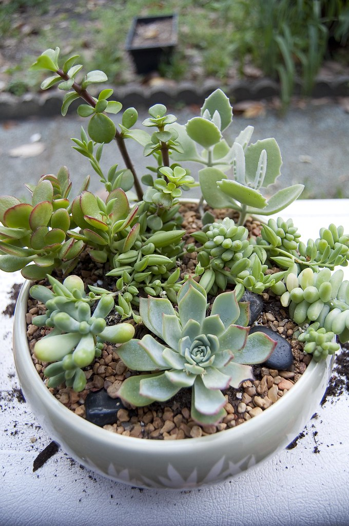 Succulent Dish Garden | By Donnaselph81 Succulent Dish Garden | By  Donnaselph81