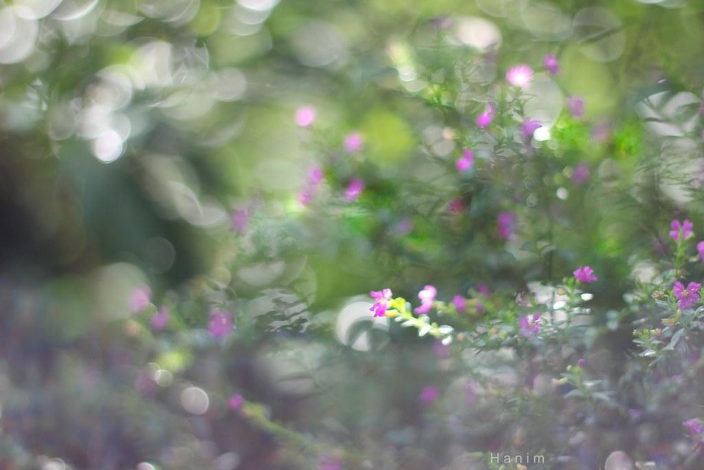munga bungas