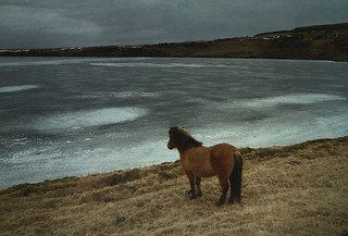 Emo Pony Waiting for the spring | by Sverrir Thorolfsson