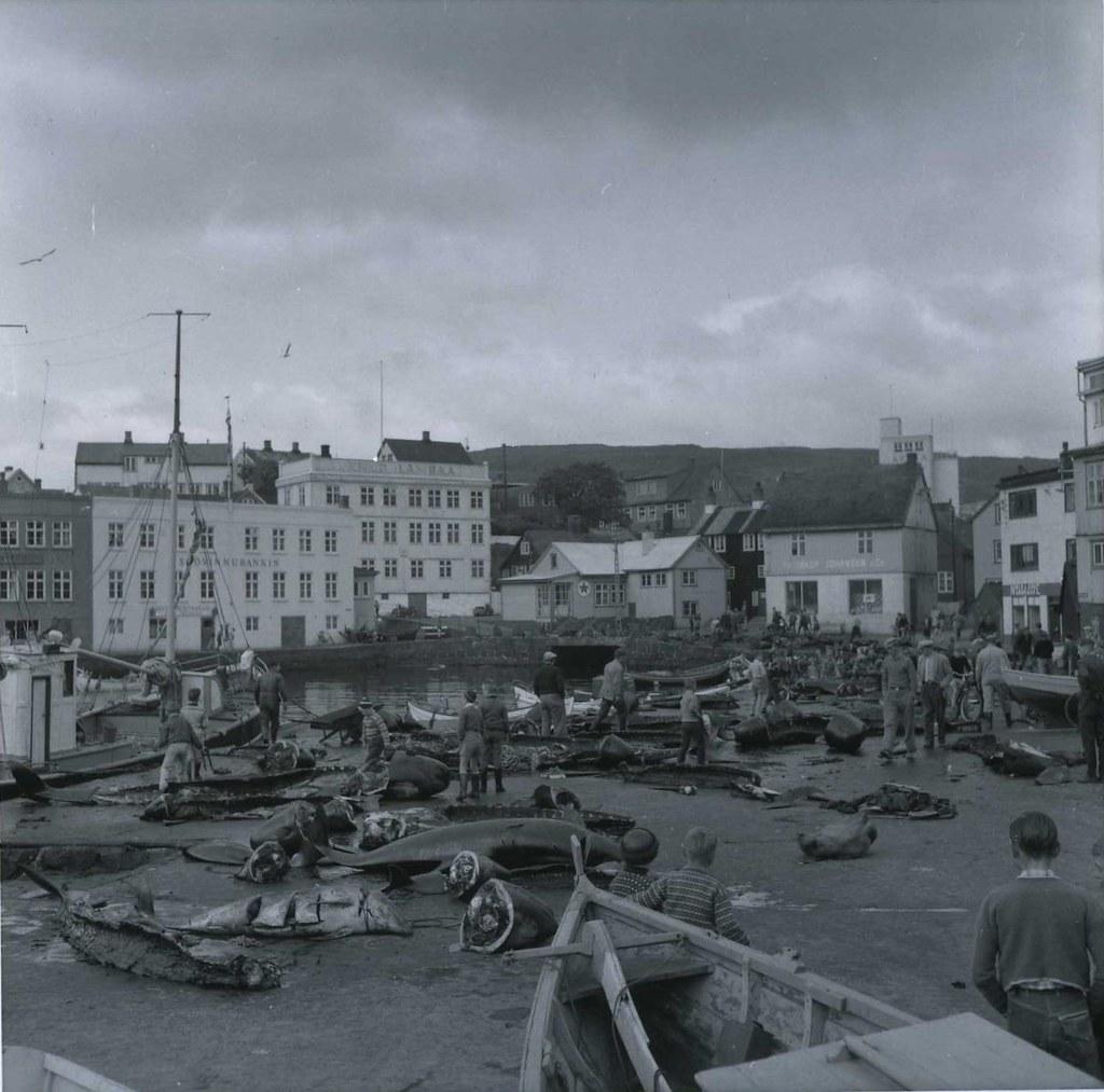 Grindefangst i Torshavn