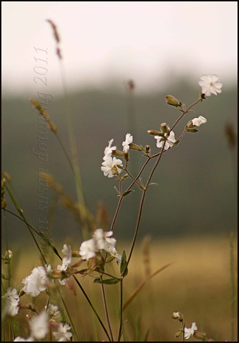 White Flowers | by Dorian Susan