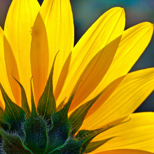 you are the sunshine.... | by janoid