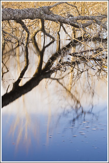 20110421. Kurtna auk. The tree and the reflections. 9077. | by Tiina Gill (busy)