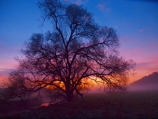 big tree a few minutes for sunrise | by hans 1960