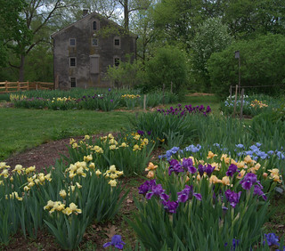 Iris garden, April 30, Springfield Mills | by Tie Guy II