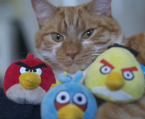 Angry Birds vs Angry Cats | by mseckington