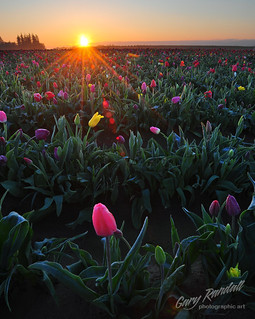Dawning on Dew Drops | by Gary Randall