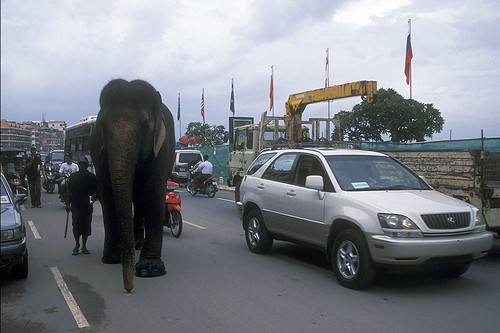 Phnom Penh - Elephant in heavy traffic | by Drriss & Marrionn