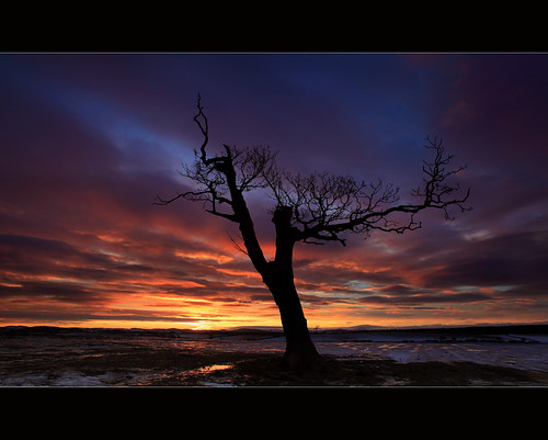 Sycamore @ Dawn | by angus clyne